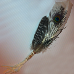 Peacock Prayer Feather